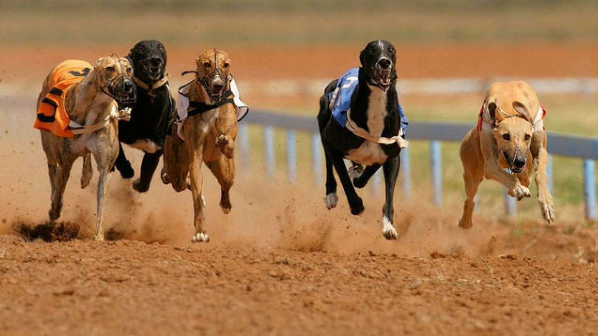 Greyhounds in #Tucson still in need of homes https://t.co/HokBJfcH7H