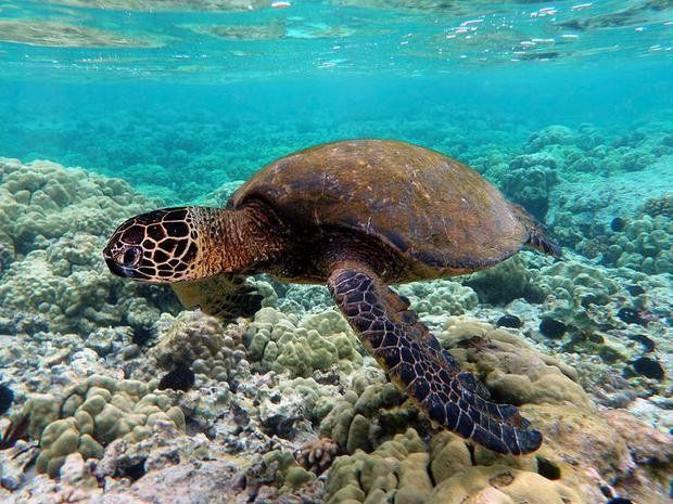 Not good—#Climate change is adversely affecting #sea turtles  http:// buff.ly/2tJZ471  &nbsp;   @timsandle<br>http://pic.twitter.com/dZqGKSlfxW