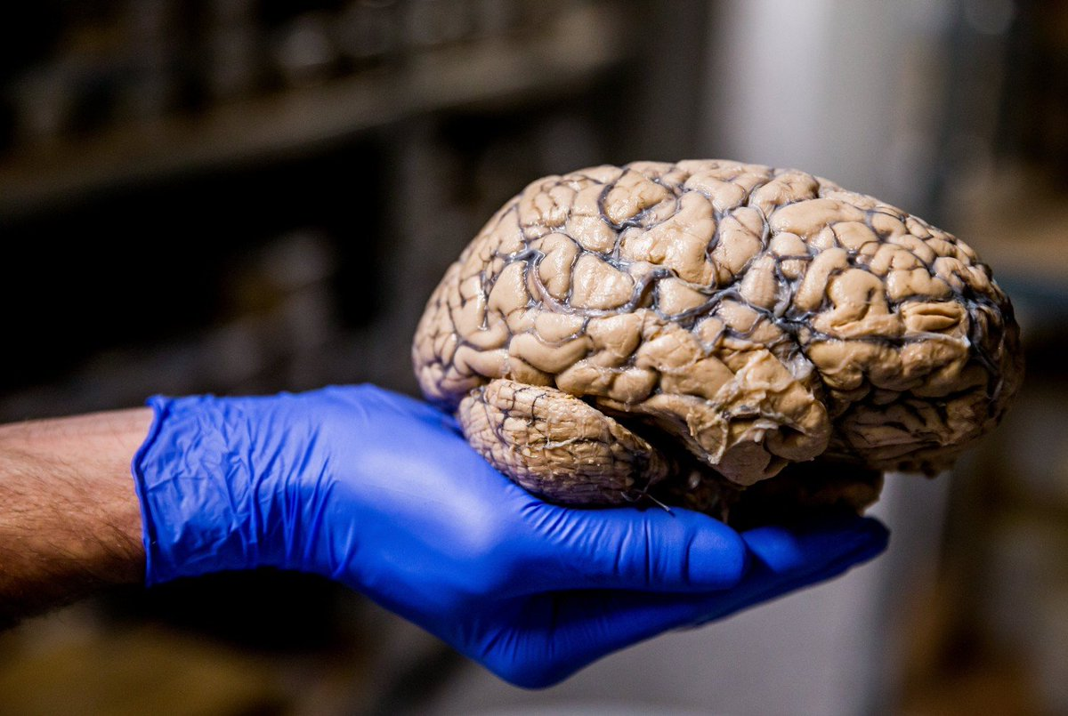 выедает мозг картинки смертельное дтп крыму