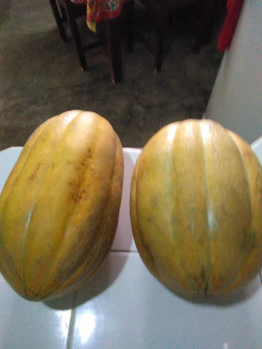 Melon criollo y sin abono @PresidenciaRD...