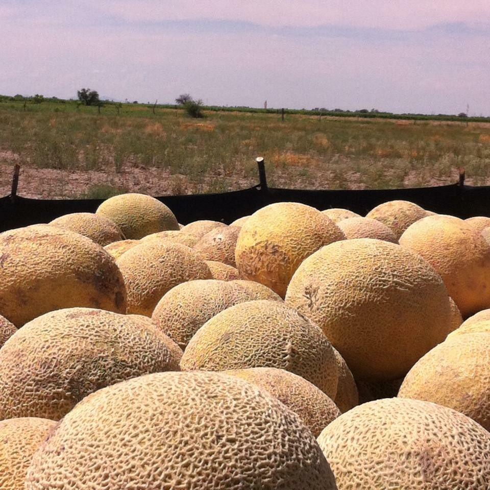El mejor melón, el de Tlahualilo  #Consu...