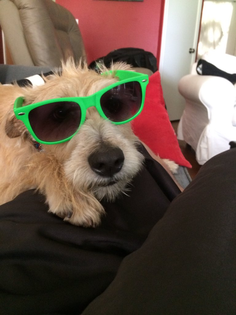 @midnight Ok, ok, here's a real one. #NationalSunglassesOnDogsDay http...