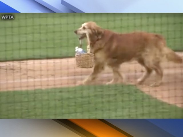 VIDEO: Jake the Diamond Dog delivers water to baseball umpires https://t.co/FZaSUVIgAN #abc15