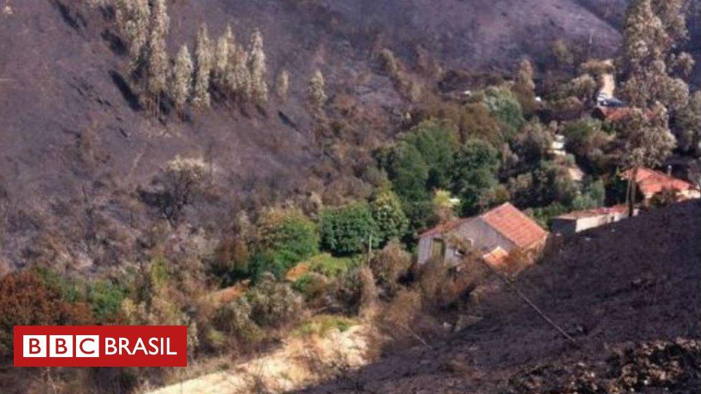 O sítio em Portugal que foi protegido por carvalhos e castanheiras durante incêndio https://t.co/HCOnDfGgbn