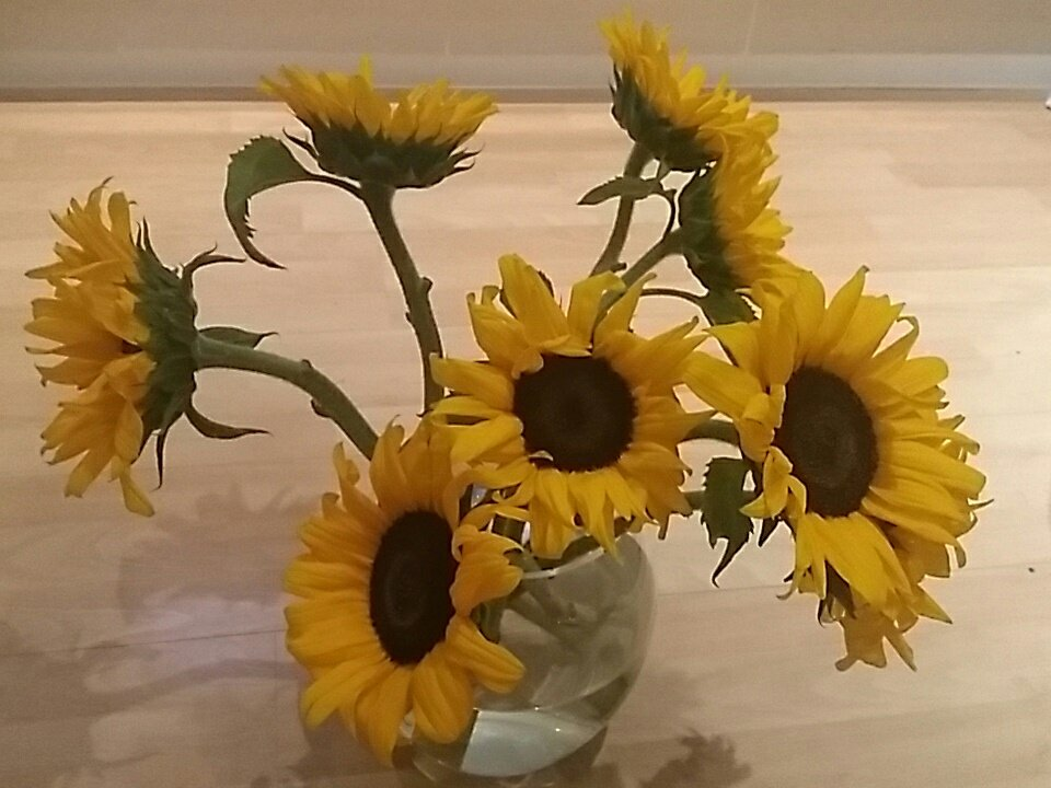 Thanks @nikki_ledingham for these and for #friendship. Have a lovely day everyone  #earlyrisersclub #sunflowers #makeadifference @NorthSn<br>http://pic.twitter.com/FDdRlE5eWH