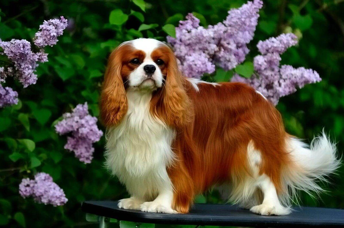 Фото собак любых пород