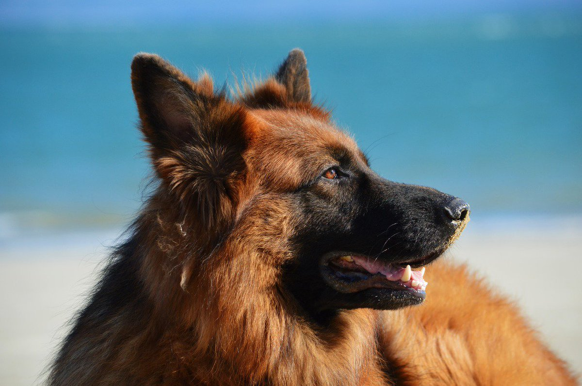 What a lovely #dog!  #friends <br>http://pic.twitter.com/cOPD8rH68O
