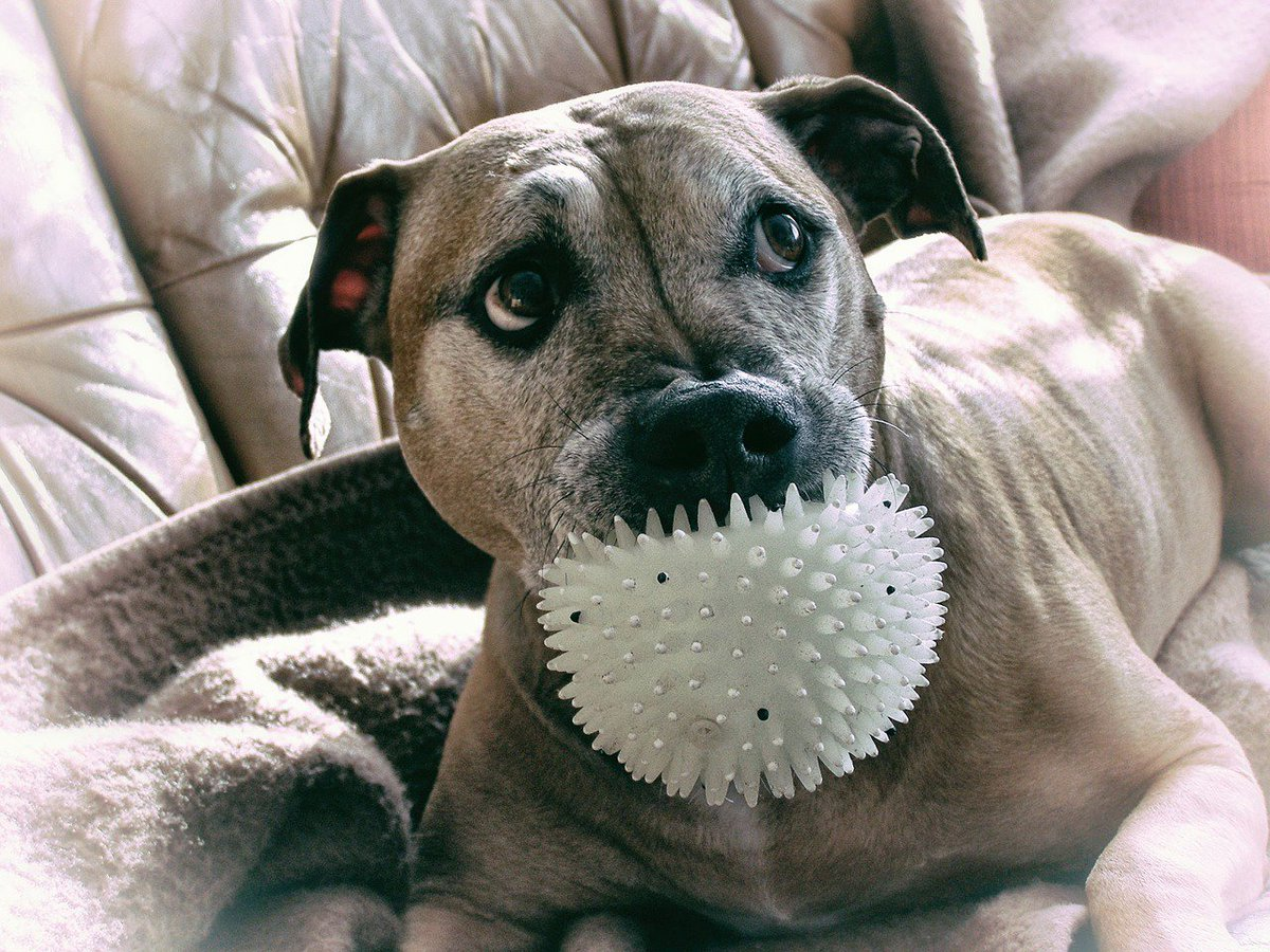You want me to drop the ball? Never! #dog #friends <br>http://pic.twitter.com/ljhxiO83qj
