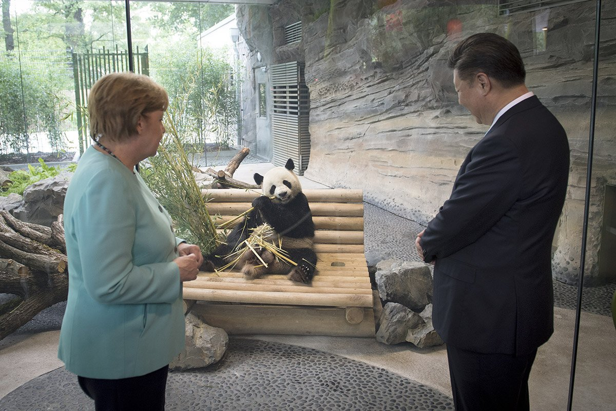 Bildergebnis für Wikimedia Commons Bilder Pandabären im Berliner Zoo