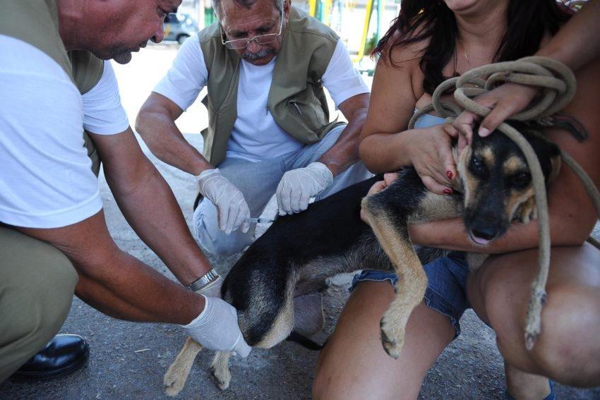 Prefeitura do Recife vacina cães e gatos após morte de mulher por raiva humana. https://t.co/DR7cKyehvU (📷  Fábio Rodrigues Pozzebom/ ABr)