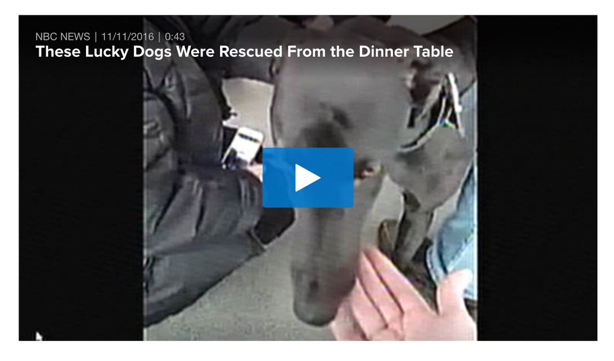 Diablo&amp;Hei Hei #Greyhounds destined to restaurants in #China rescued in July thanks activists now safe in #UK   https:// m.facebook.com/LeeAnnWong99/p osts/10211870670614539 &nbsp; … <br>http://pic.twitter.com/H2MHmfKTTl