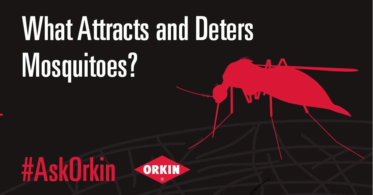 Orkin Pest Control on Twitter: