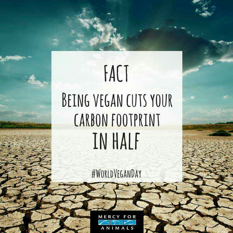 It is estimated that 4 million people in theUKface the threat of #flooding caused by#globalwarming #climatechange #EarthDay #climatefacts<br>http://pic.twitter.com/8G4WJgLIij