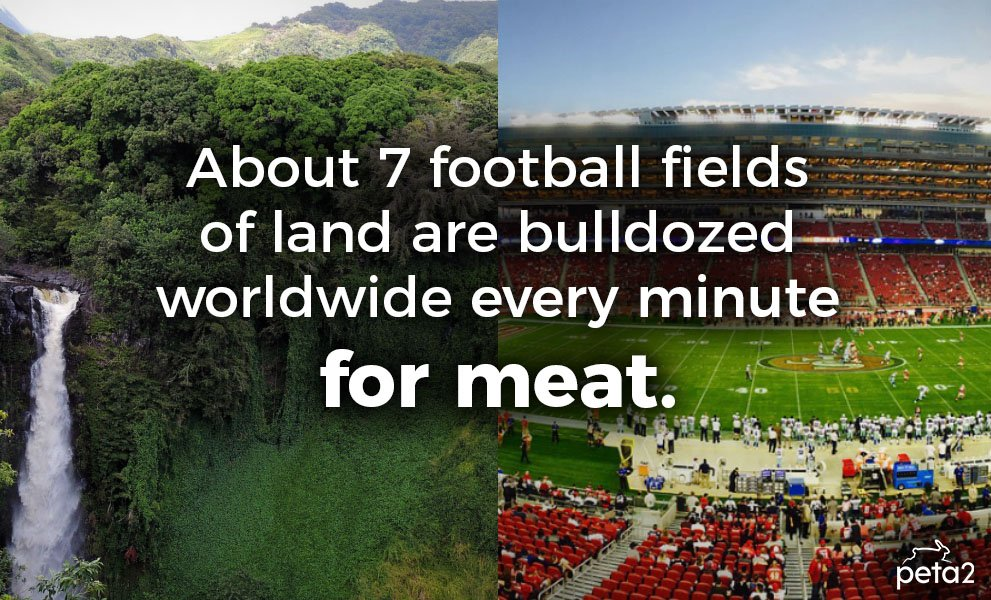 Going #vegan is the best way to help the environment. RT to help save...