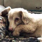 Meet Jesse pup stories