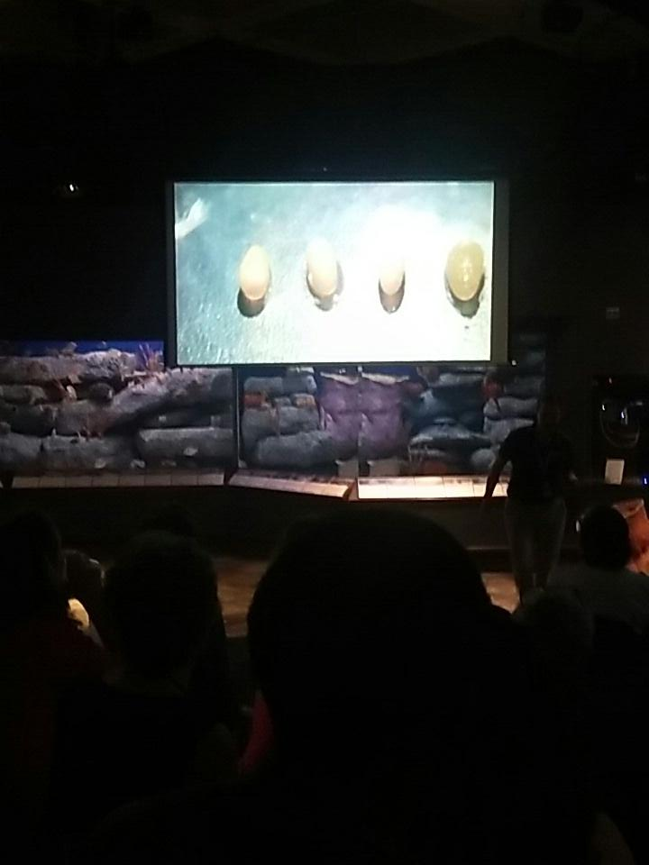 #cephaloparty @NatlMarineEd #nmea17 #sciencefriday octopus eggs #opistoteuthis https://t.co/L5H3cd1MFt