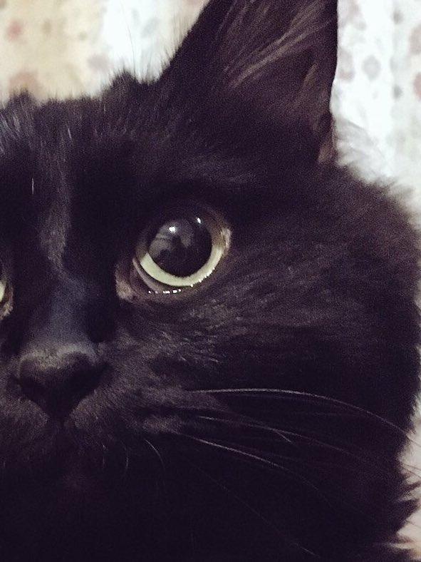 さっきの写メのアップ。夜さん本当白目多いな…野生に向いてないから飼い猫になって正解だったね。笑 https://t.co/gb2PCgp55...