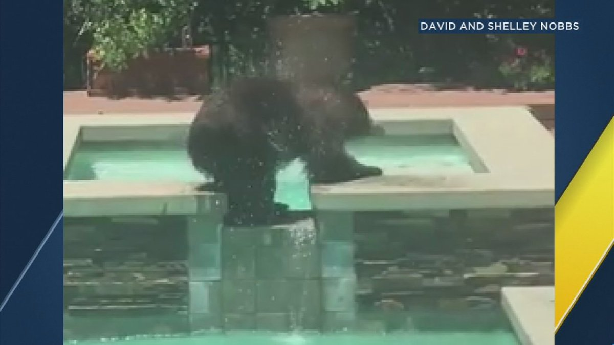 Video: bear cools off on a hot summer day by taking a dip in a SoCal b...