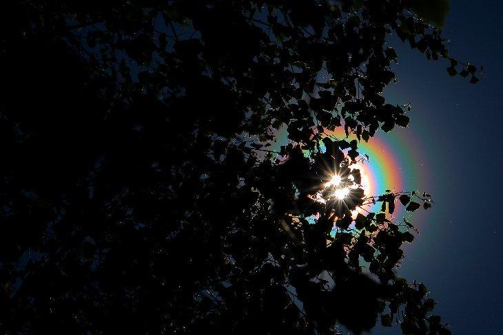 Buenos días y #FelizJueves  Árboles de #Finlandia liberando nubes de p...