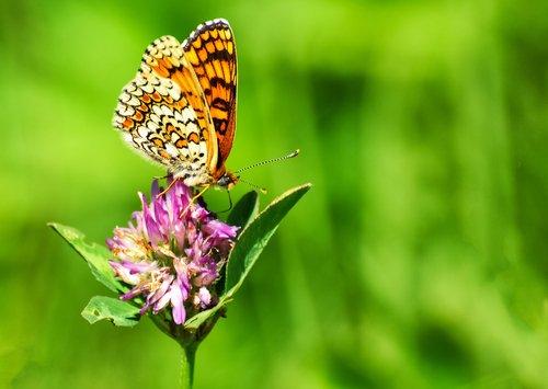 La PAC laisse de côté les abeilles et les pollinisateurs https://t.co/...