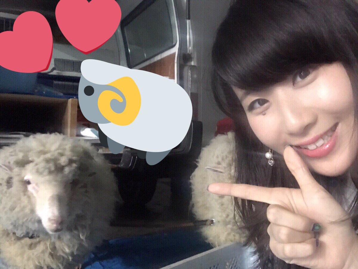 十二支再競争レースのリハにきた。ぱちおは1位羊にいれたのでご挨拶(╹◡╹)元気そう♪がんばってねひつちゃん!!  #モンスト十二支 http...
