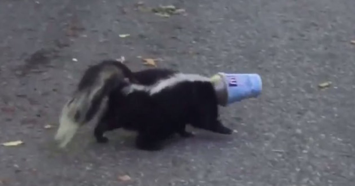 Canadian skunks can't stop getting stuck in McFlurry cups https://t.co...
