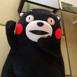 おやくま〜☆ pic.twitter.com/BBSLfvlQ3x
