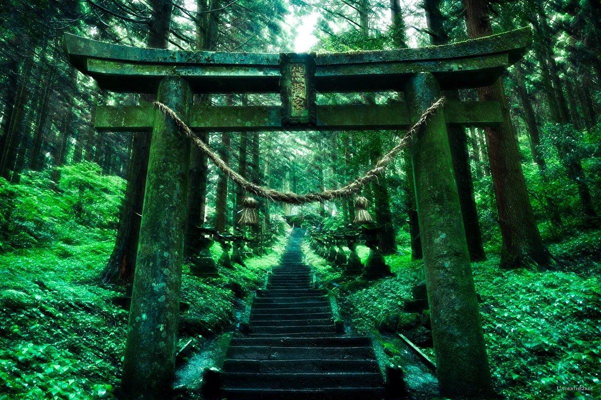 翡 翠 の 杜 に 迷 い 込 ん だ 日。  撮影地 : 熊本県 上色見熊野座神社  #熊本 #上色見熊野座神社