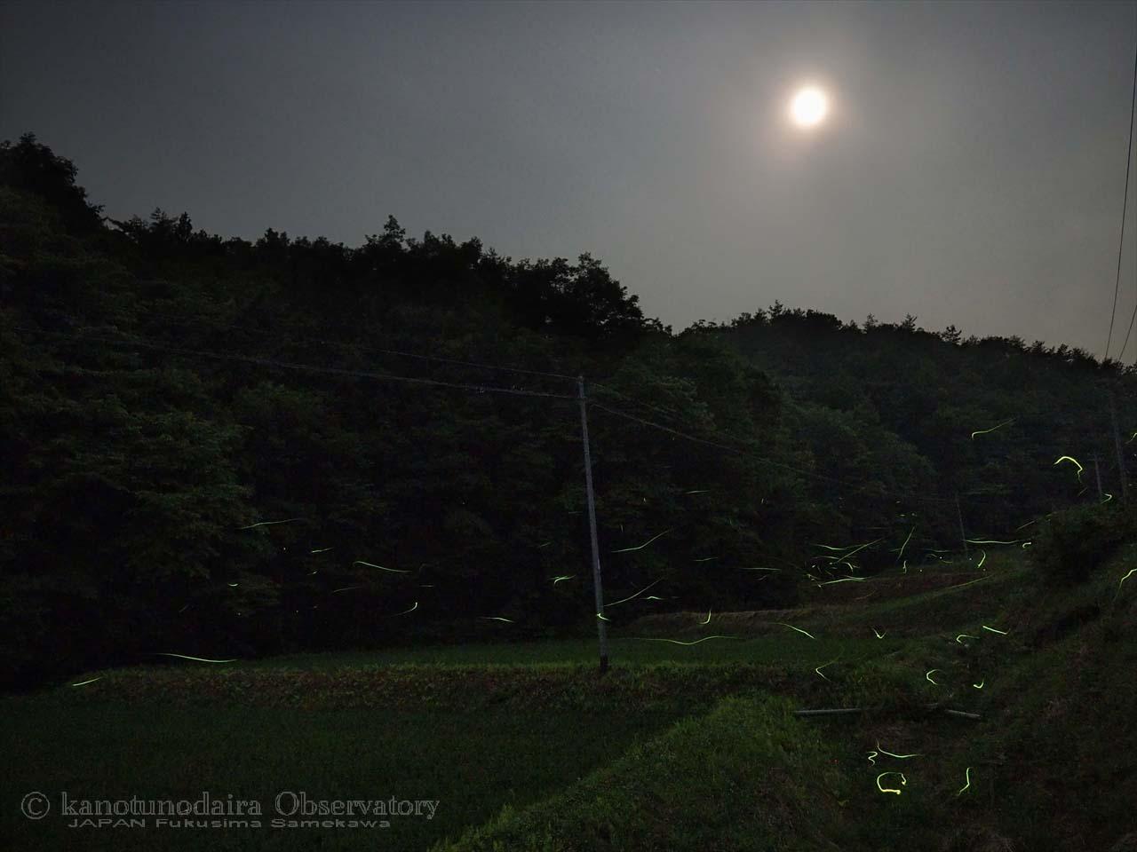 梅雨空で星が見えないけど蛍が見頃です。