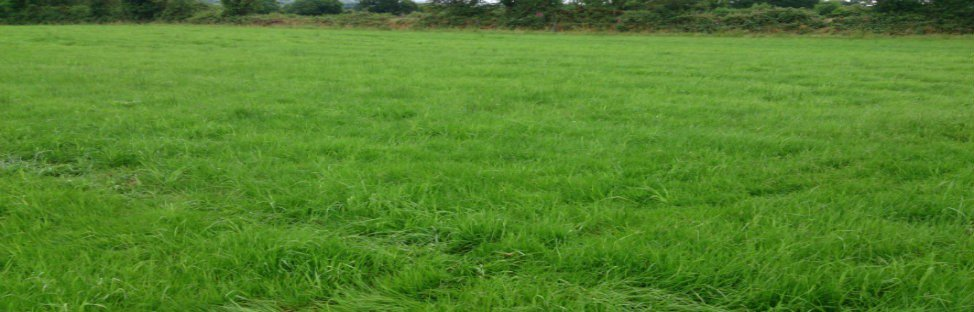 Reseeding &amp; Grassland Weed Control #GrasslandManagement #Agronomy #AgriBlog  http:// redmills.ie/Agri/The-Lates t-Graze/Blog/June-2017-(1)/Reseeding-and-Grassland-Weed-Control &nbsp; … <br>http://pic.twitter.com/p9ASsgZKWN