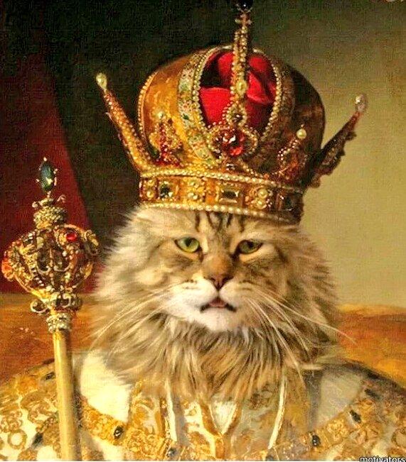отвечает впитывание фото приколы царя есть как
