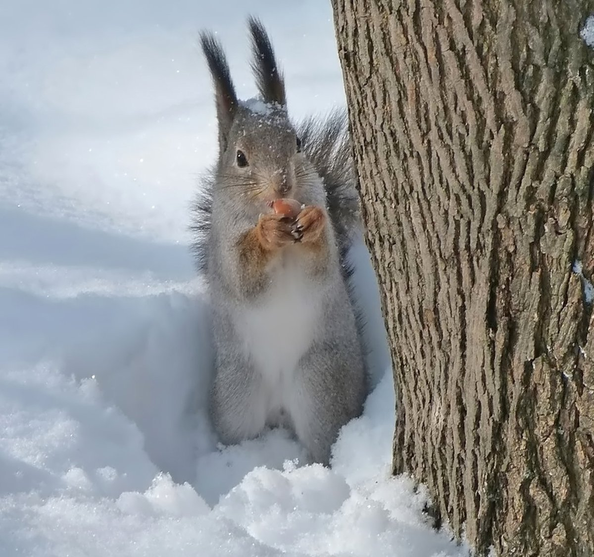 картинки весна животные на снегу