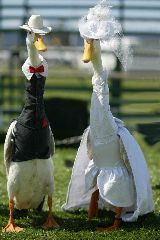 фото поздравления картинка гуся символы