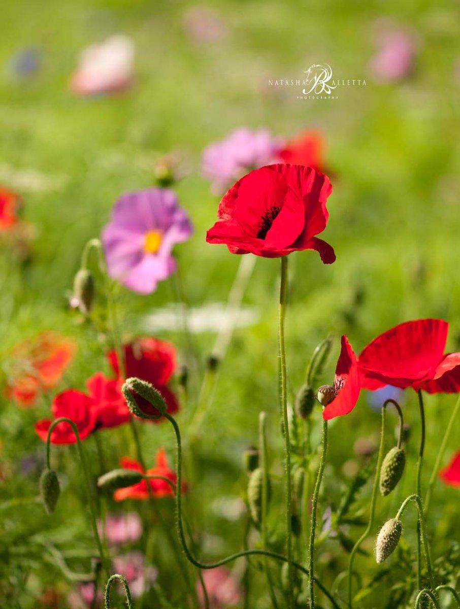 One of my #flowerprints available in my #EtsyShop  https://www. etsy.com/uk/listing/537 520657/flower-art-photography-photographic?ref=shop_home_active_11 &nbsp; …  #wallart #giftsforher #bizitalk #etsygifts #smallbiz #HHLunch<br>http://pic.twitter.com/cmmdjmZ96J