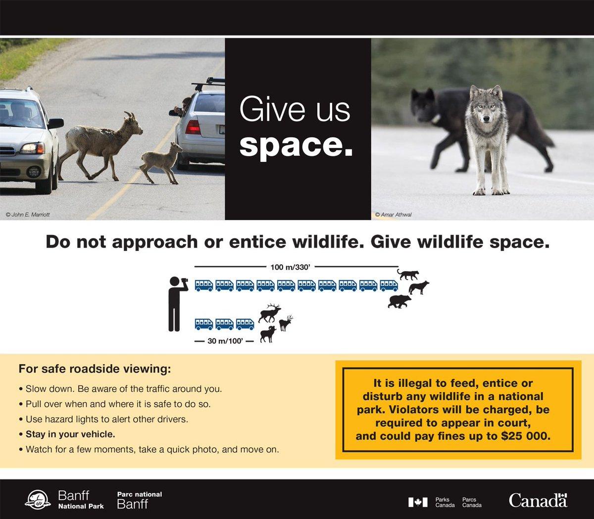 Help keep them wild. Do not approach or entice wildlife. #KeepWildlifeWild https://t.co/vwpqPLvxrw