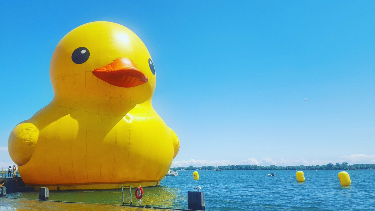 The World's Largest Rubber Duck is officially floating on #Toronto waters!