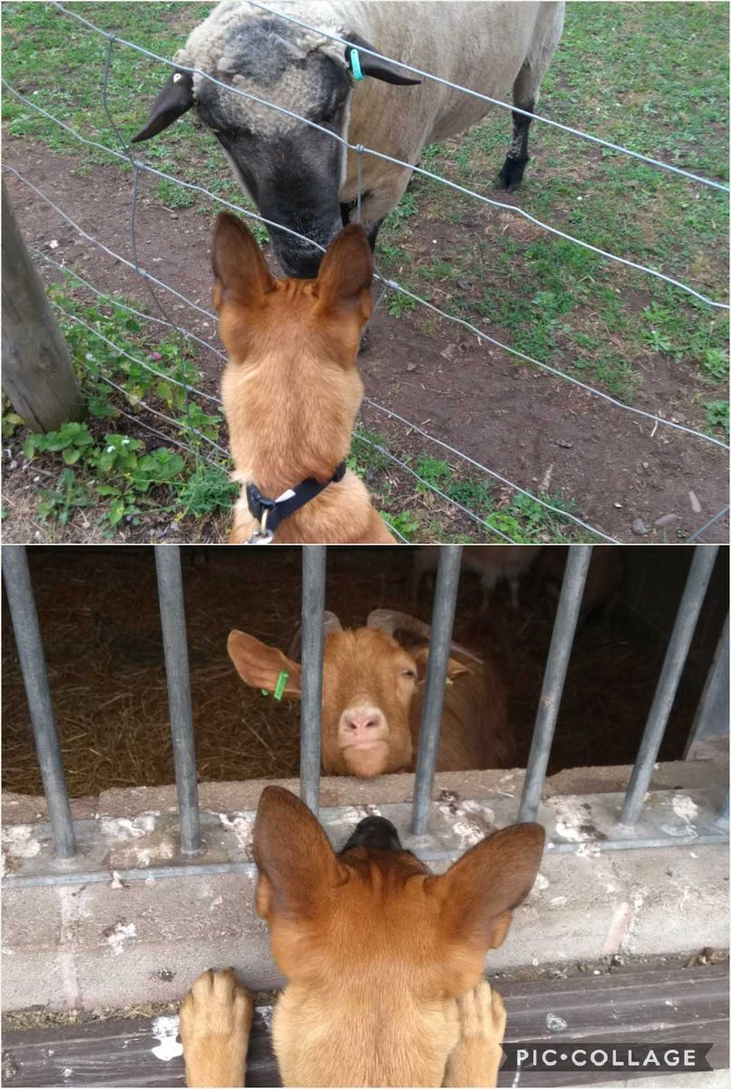 A trip to the farm today & managed to get up close & personal to some animals. All nice & calm 🐾 #calmclickreward