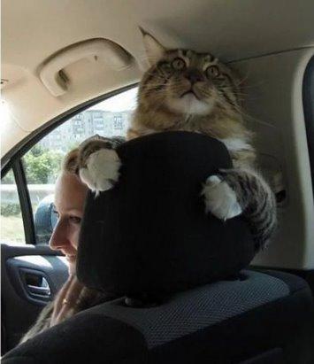 скачать читы для сампа летать на машине