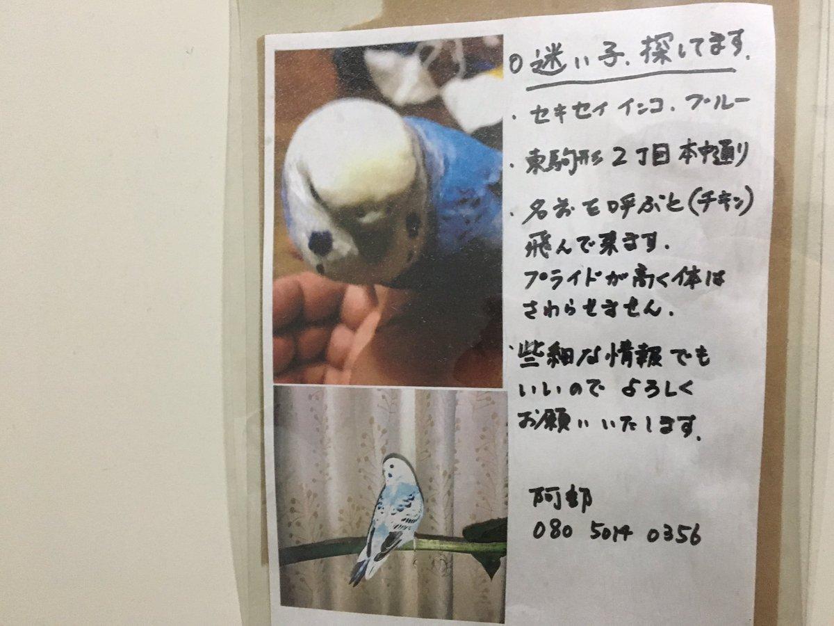 浅草近辺で貼り出されている迷い鳥のチラシ。名前……バードならまだしも  _人人人人人_> チキン <  ̄Y^Y^Y^Y ̄ 見つかるといいですね。チキンちゃん。 https://t.co/jeIVUS4CvX