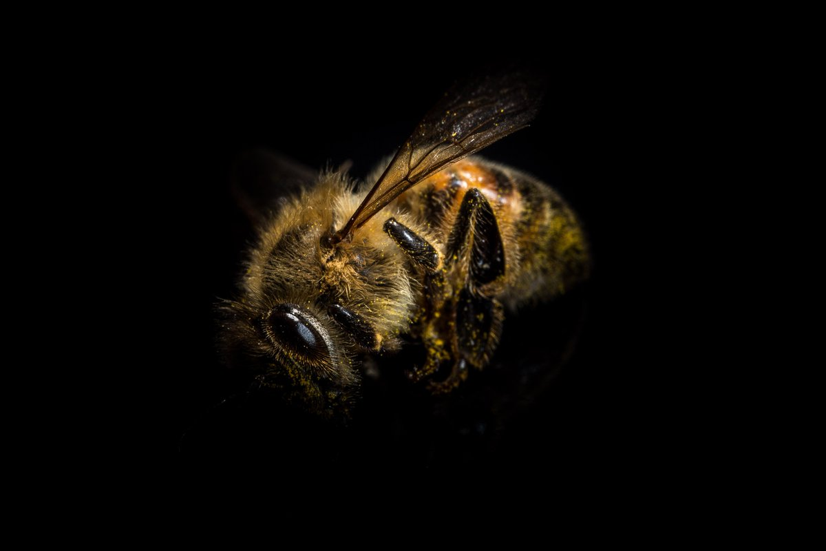 we can t survive without bees Long live the queen bee but if she doesn't, the colony will prevail august 5, 2013 417pm edt without a queen, the rest of a bee colony will keep calm and carry on.