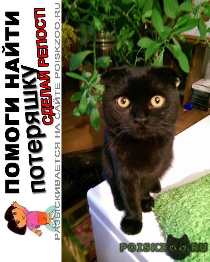 кошки в подарок ростов на дону фотографии порода декоративных