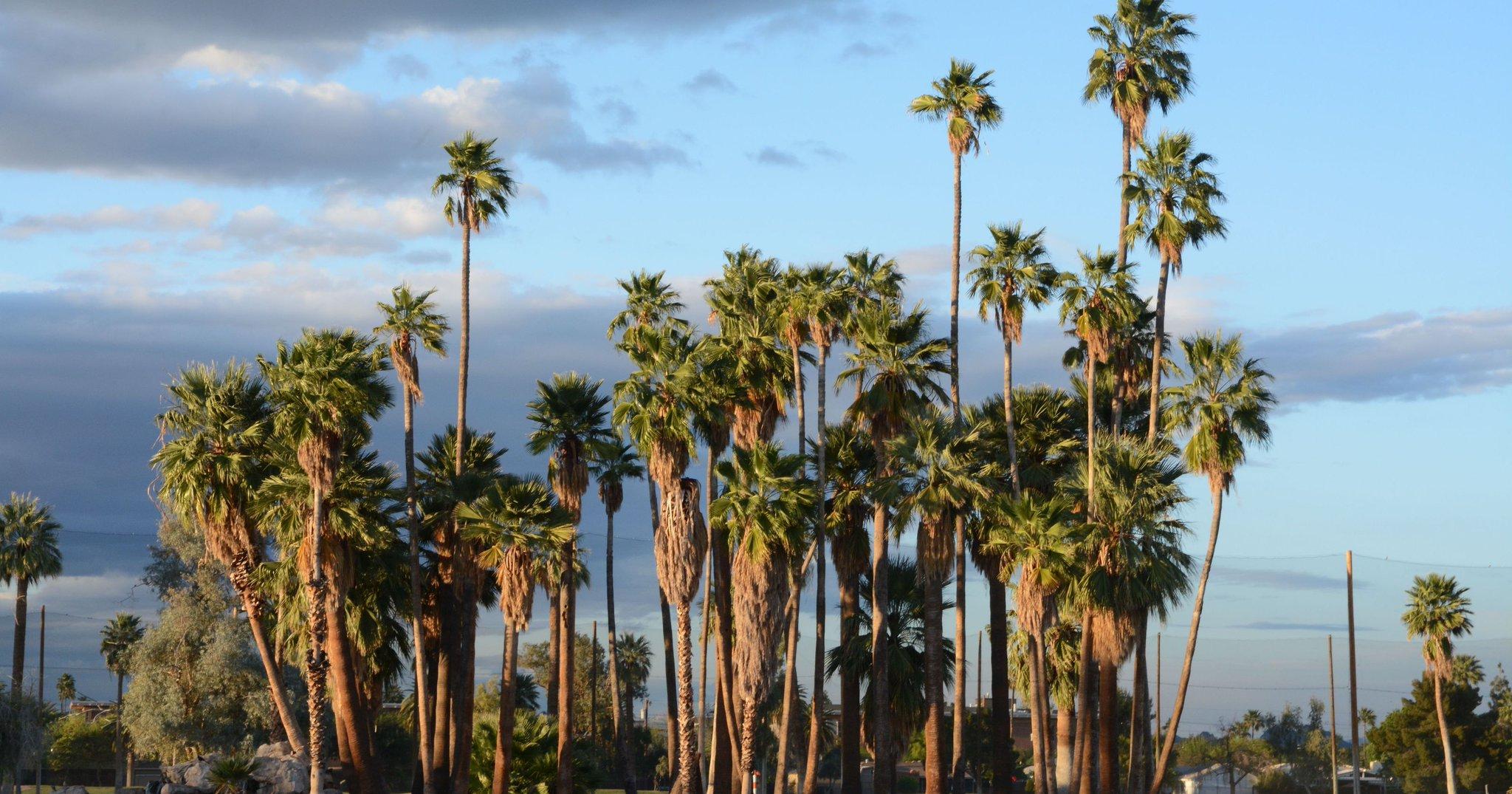 A Tree Used to Grow in Phoenix @azcentral @57MCM @TreesMatterAZ https://t.co/r2i7cnFGE1 https://t.co/pORLKSZya5