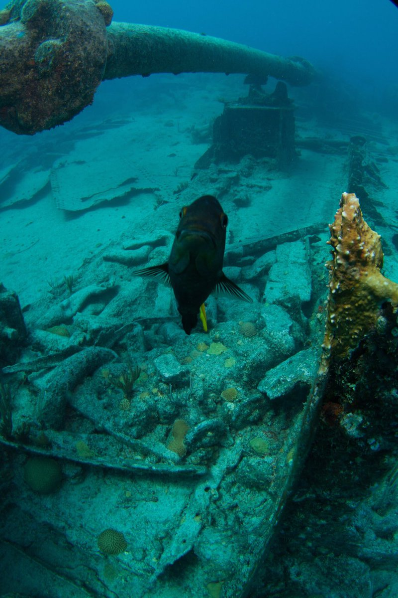Grotto Bay Resort On Twitter The Dive Is Open For Season With Divebermuda Leaves Twice A Day From Grottobaybda