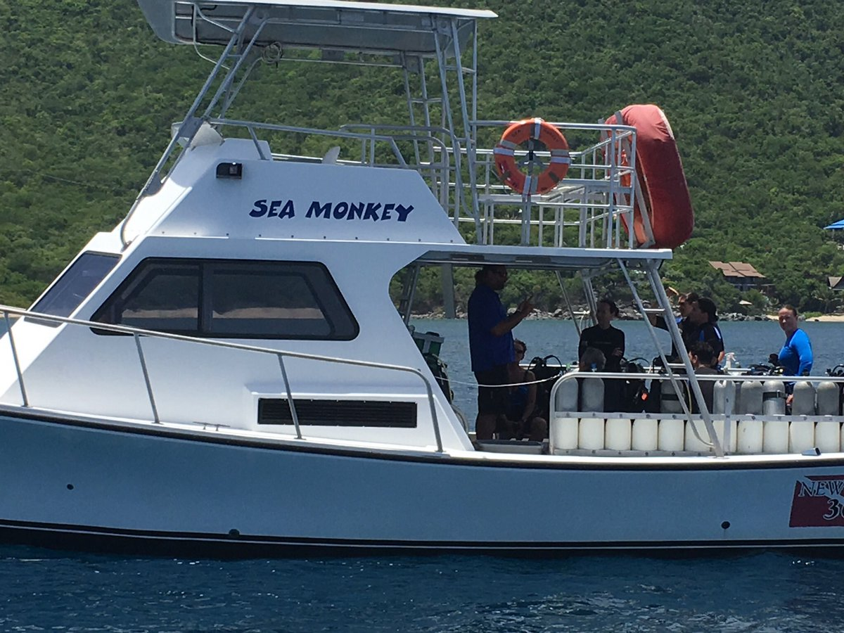 seamonkey hashtag on Twitter