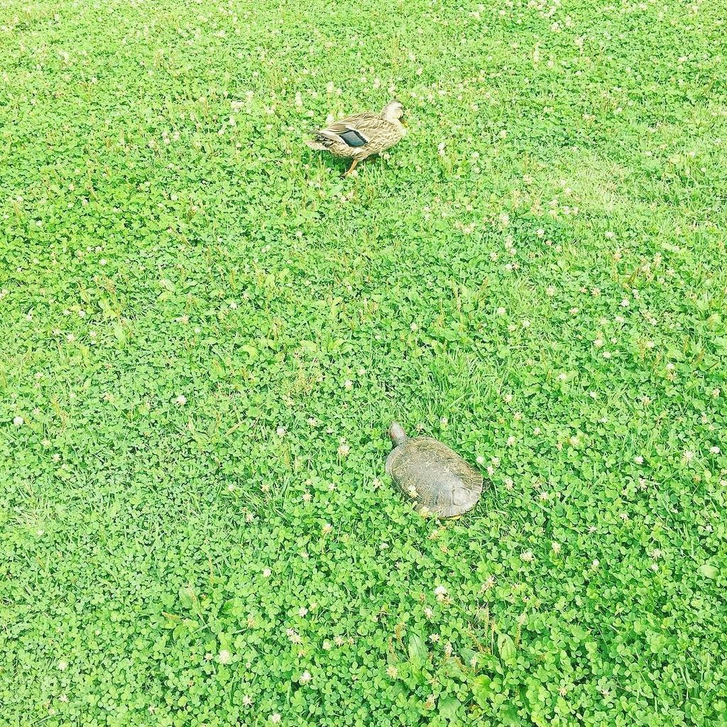 とある撮影中、ふと横を見たら亀と鴨!仲良し! #CREA #creamagazine #亀 #鴨 #不思議なツーショット #仲良し https://t.co/0msABVvBBV