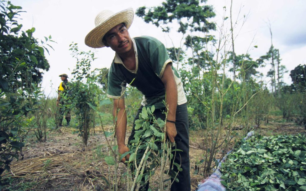 Colombian Coca Production Makes Record-Breaking Jump – High Times