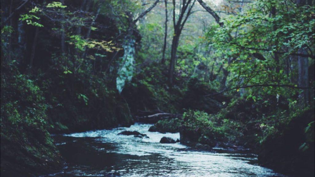 CalmingForest hashtag on Twitter