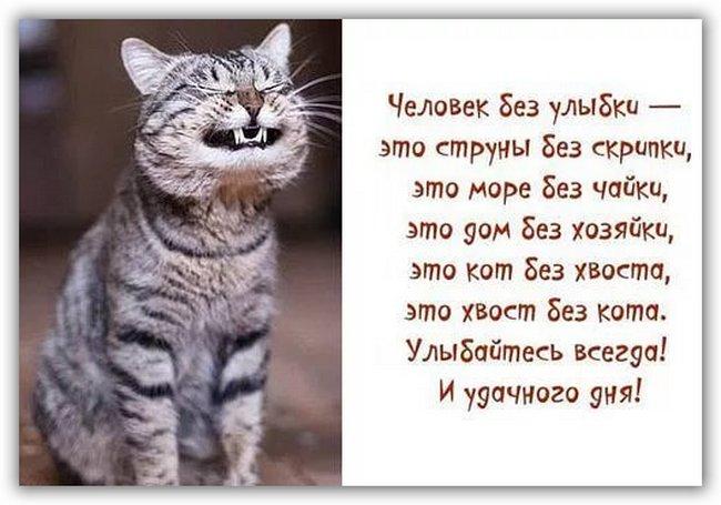 которого получена картинки в стихах просыпайся котик экземпляры