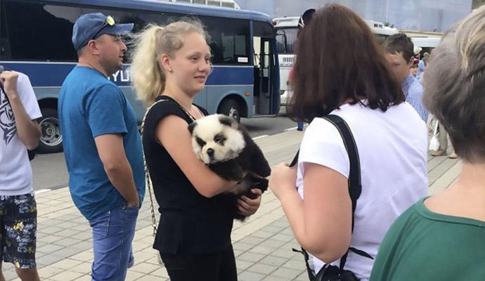 Enganados na Rússia : Turistas pagavam por foto com 'panda' que era um cão https://t.co/zURtlcqKR3