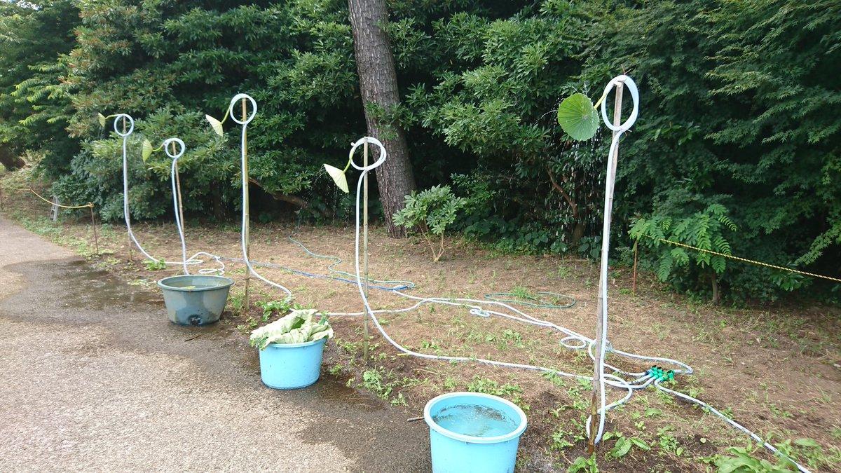 蓮の葉ってシャワーノズルになるのか・・・(;´Д`) ※横浜・三渓園にて。